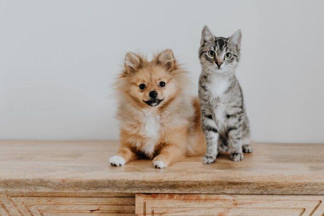 jak przyzwyczaić psa i kota