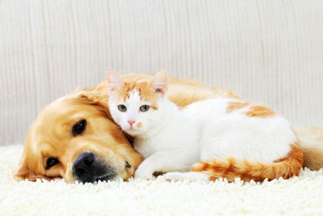 jak zaprzyjaźnić psa i kota