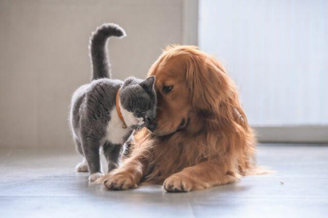 jak zapoznać psa z kotem