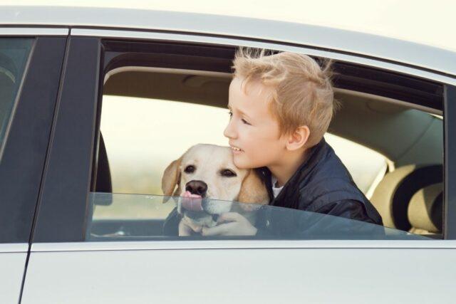 pies dla rodziny