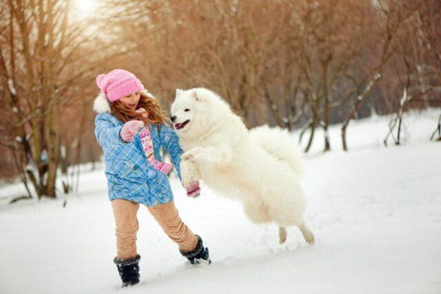 psy dla dziecka