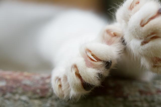 czy kotu obcina się pazury