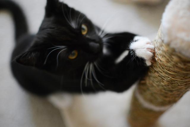 jak obciąć kotu pazury