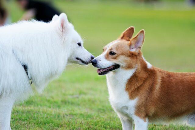 cieczka u psa