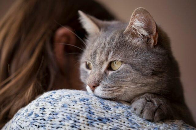 dlaczego koty mrucza